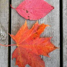 A legnagyobb művész maga a természet 🎨🍁🍂💛 #naturelove #naturliebe #nature #természet #természetjaras #levelek #ősz #herbst #herbstlich #fall #fallvibes #autmn #red #vörös #szinek #colors