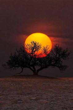 "scentdelanature: "" 'Tree of Wisdom' / Aaron J. Groe """
