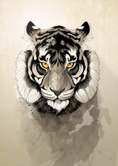 tiger wild nature animal animals free