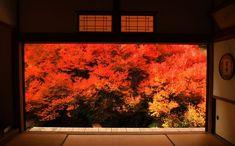 まるで1枚の絵画のような紅葉!兵庫県「安国寺」ドウダンツツジ | 兵庫県 | [たびねす] by Travel.jp