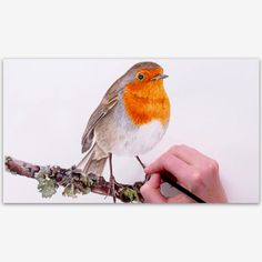 In this tip video, I show you how to paint this sweet little Robin. It's a complex subject, so I think it's helpful to see me break it down into steps: