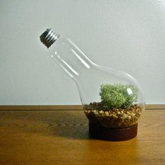 Repurposed Lightbulb Vase/Terrarium