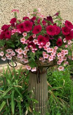 Best summer container garden ideas 64