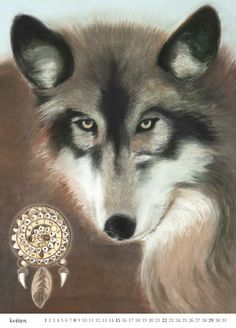 5 vlk
