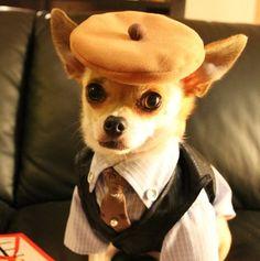 Chihuahua bling.