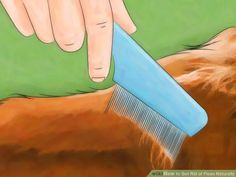 3 Use a flea comb. After your pet is dry, use a flea comb that is specifically designed to remove fleas in order to get rid of stubborn ones that remain. Use the brush all over their skin.