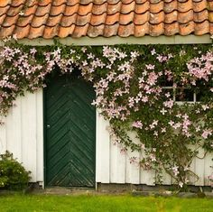Grow your garden from ordinary to extraordinary with flowering vines that add a beautiful new level of interest to your landscape.