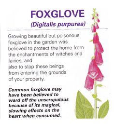 Foxglove is a staple in a witches garden and has been used to protect the witch and her home for centuries but if you ingest any, it'll kill you. Healing Herbs, Medicinal Plants, Natural Healing, Poisonous Plants, Holistic Healing, Magic Herbs, Herbal Magic, Plant Magic, Herbal Tinctures