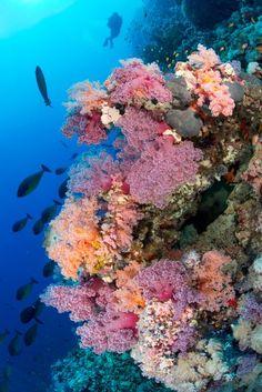 Steilwände, Korallen, Fische: Dieser Dreisatz macht aus dem Sudan eines der...