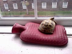 "Tiny pets: tortoise hot water bottle. ""On a cold day, Punasaur watches the world go by from a heated sofa"""
