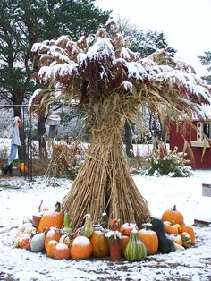 Uh oh. Winter came early to the punkin patch.  Somebody better start makin' punkin goodies fast!