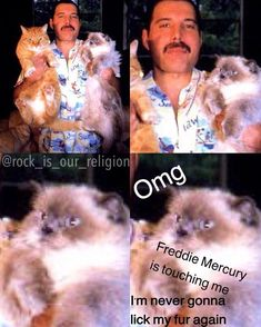 Then the cat realizes that it lives with Freddie Mercury - Queen - Katzen Queen Freddie Mercury, Freddie Mercury Meme, John Deacon, Bryan May, Rainha Do Rock, Queen Meme, Roger Taylor, Tribute, We Will Rock You