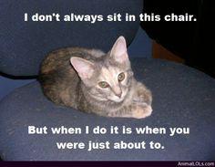 Chair Jacker - http://www.animallols.com/cats/chair-jacker/