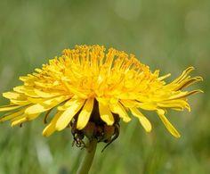 Bylinky na zánět močového měchýře Plants, Plant, Planets