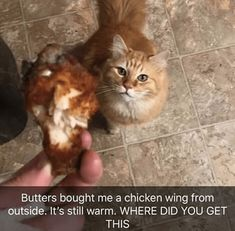 50 Cat Memes Hot And Fresh Out The Kitchen For Another Glorious Caturday - World's largest collection of cat memes and other animals Funny Animal Photos, Funny Animal Memes, Cute Funny Animals, Funny Cute, Cute Cats, Funny Pictures, Funny Memes, Funniest Cat Memes, Funny Kitties