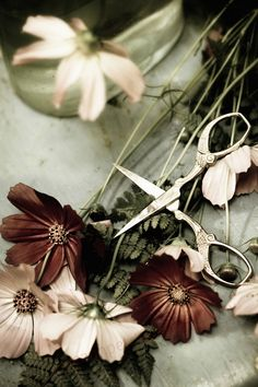 """how sad and bad and mad it was - but then, how it was sweet"" -- Robert Browning ::: photo credit ~ Ana Rosa . Cut Flowers, Beautiful Flowers, Dried Flowers, Beautiful Pictures, Ivy House, Arte Floral, Green And Brown, Belle Photo, Natural"