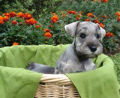 Basket full of LOVE!