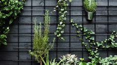 Balcony Garden, Garden Pots, Vegetable Garden, Garden Ideas, White Planters, Planter Pots, Alpine Plants, Garden Types, Flowering Shrubs