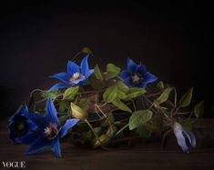 clematis Arabell polimeryclay cold porcelain Cold Porcelain Flowers, Clematis, Plants, Plant, Planets