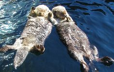 Otters - could watch them forever!