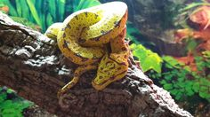 Snake, Animals, Morelia, Animales, Animaux, Snakes, Animal, Animais