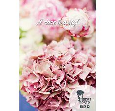 #flowers  #hydrangeas #beauty