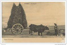 COSTUMES - PORTUGAL - ALENTEJO ÉVORA Carro de Trigo carte postale