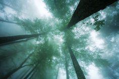 High into the mist