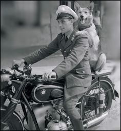 German Shepherd riding on the back of a BMW motorcycle with his soldier friend Facebook.com/sodoggonefunny