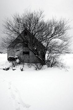Tree and house in Winter (Bornholm) by Mads F, via Flickr