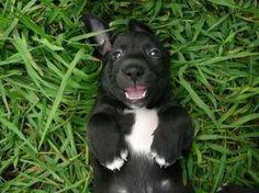 Dachshund Border Collie Mix Border Collie Dachshund Mix Dog For Adoption In Paris Illinois