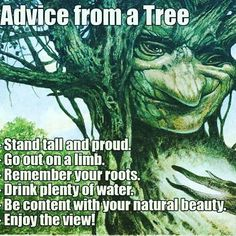 Such wise advice don't ya think? 💚 I just love #trees #hugatree #treehugger 🌳 listen & you will hear their #messages 🍃 #nature #tree #motherearth #hippie #meditate #betruebeyou #heart #woods #getoutside #noticenature #integrity #truth #earth #angels #fairies #crone