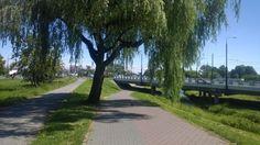 Jadąc dzisiaj zauważyłem ze w końcu przycięte :) #lublin #rower
