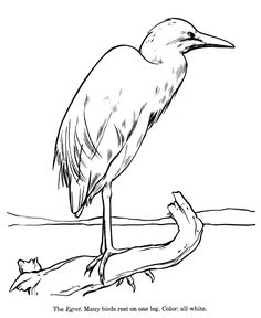 Egret Drawing And Coloring Page