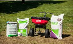 Lawn Turf, Seed Germination, Baby Strollers, Improve Yourself, Seeds, Canning, Fall, Baby Prams, Autumn