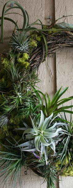 The Rainforest Garden: DIY Mossy Tillandsia Wreath (live plants ) pretty outside Love Garden, Garden Art, Garden Plants, Indoor Plants, Indoor Herbs, Indoor Gardening, Air Plant Terrarium, Terrariums, Deco Nature