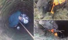 Dopo un mese in un pozzo, salvato cane cieco, definito come il Miracolo di Natale/video