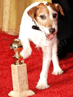 """""""Uggie"""" (The dog from """"The Artist"""") at the Golden Globes!  Yes, i think he stole the show.  :-)"""