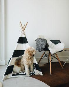 A black and white dog teepee.