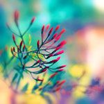 Great DOF and colors.