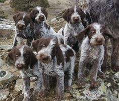 WPG Pups. Love them!!