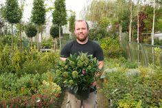 Skimmia x confusa 'Kew Green' - Big Plant Nursery Big Plants, Plant Nursery, Horticulture, Evergreen, Shrubs, Trees, Gardening, Board, Vivarium
