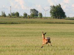 Deer, Trelleborg, Sweden Helsingborg, Sweden, Animals, Beautiful, Trelleborg, Animales, Animaux, Animal, Animais