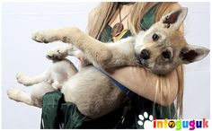 Media Diskusi dan Informasi Komunitas Penggemar Anjing di Indonesia. Berisi cara perawatan,kesehatan anjing, galeri foto anjing, video kontes anjing dan semua untuk gukfriends