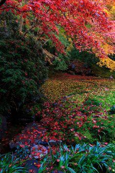 花景色-K.W.C. PhotoBlogの画像
