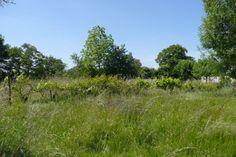 Terrain constructible Gironde Pineuilh