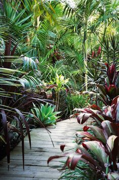 Love the look of a vibrant tropical garden, but don't live in the tropics? No problem! With some colourful and lush foliage, a diverse plant palette and the right array of layered plants, you can have an exotic and dense tropical garden in no time. There are no rules here; use your imagination! Colour through..