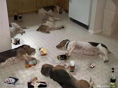 Dog Party Hangover #funny