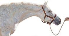 • @julieferris_equine_artist ~ 'Lead Me' ~ Medium: Oil on Canvas ~ Artist: Julie Ferris www.julieferrisart.com ~ Instagram: @julieferris_equine_artist 🎨