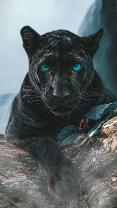 Pretty Animals, Black Animals, Cute Funny Animals, Animals Beautiful, Majestic Animals, Rare Animals, Animals And Pets, Black Panther Cat, Animal Wallpaper